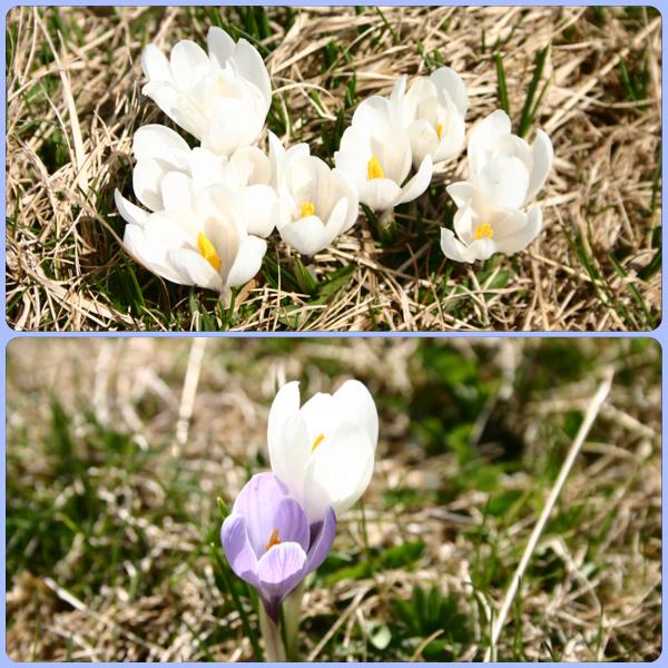 리기산 꽃